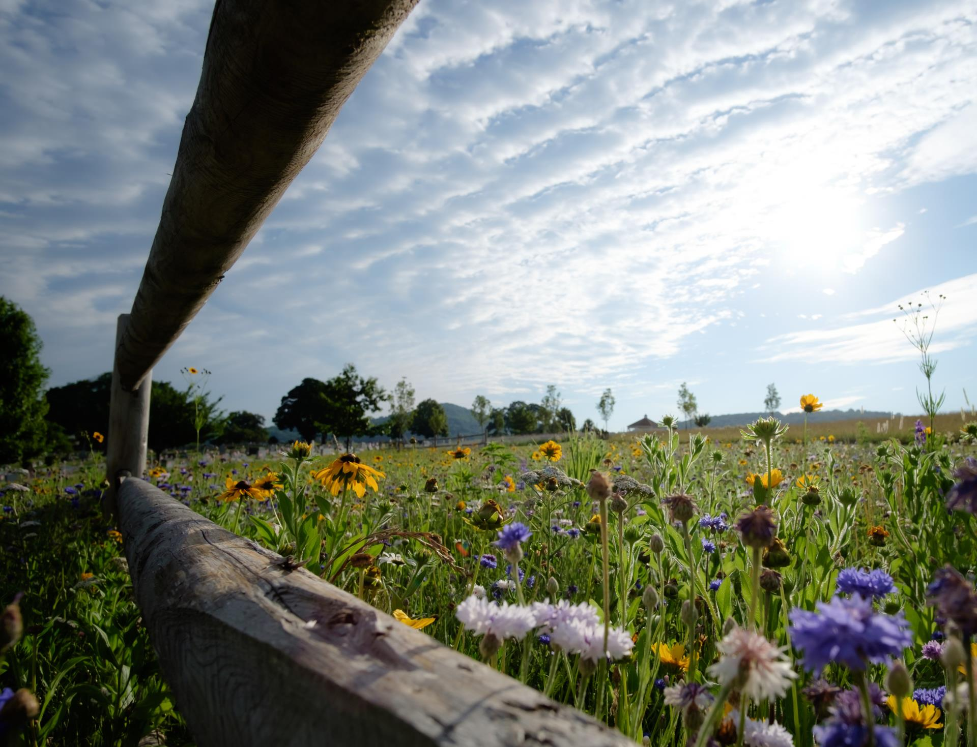 Natural Burial area with fence and flowers