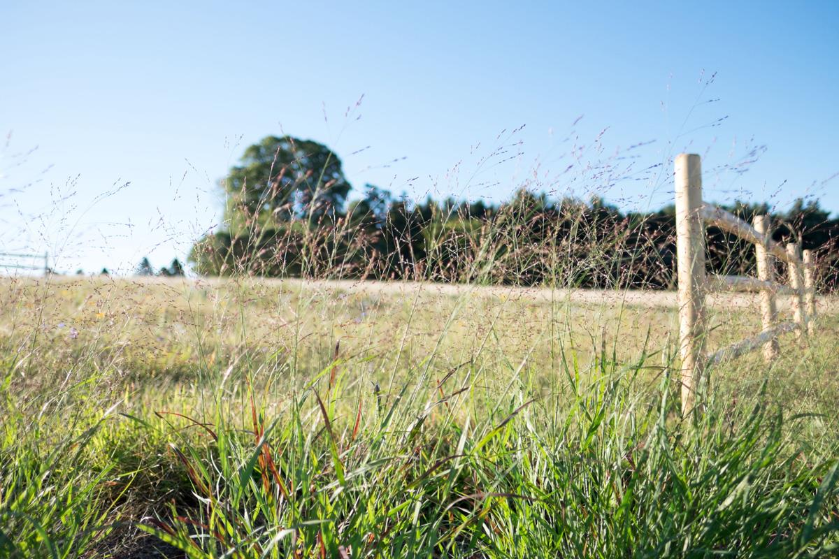 Natural Burial section with tall grass blowing in the wind