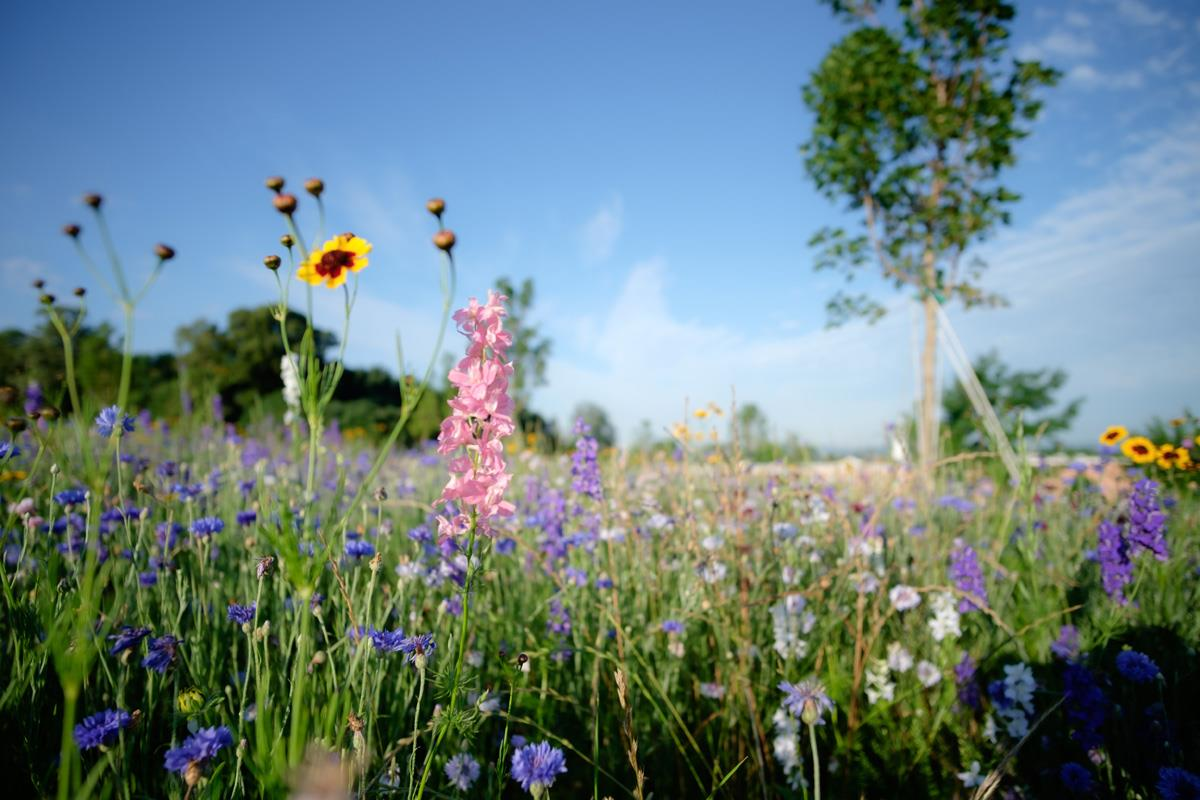 Natural Burial section with Pink and blue flowers